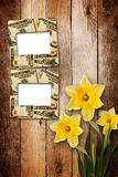 Card for invitation  with bouquet of flowers narcissus Royalty Free Stock Photo