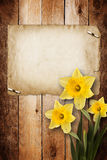 Card for invitation with bouquet of flowers narcissus Royalty Free Stock Images