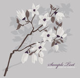 Card or invitation with cherry blossom background Royalty Free Stock Images