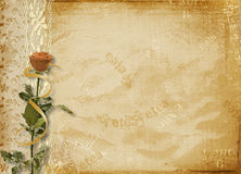 Card for invitation or congratulation. With rose and lace Royalty Free Stock Images