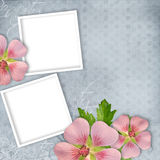 Card for invitation or congratulation Royalty Free Stock Image