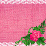 Card invitation or congratulation with flowers. Pink card invitation or congratulation with flowers, plants and ribbon Stock Photos