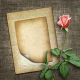 Card for invitation or congratulation with pink rose Royalty Free Stock Image