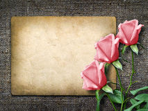 Card for invitation or congratulation with pink rose Royalty Free Stock Photo