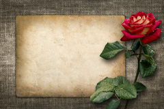 Card for invitation or congratulation with red rose. In vintage style Stock Photography