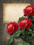Card for invitation or congratulation with red roses. In vintage style Royalty Free Stock Photo