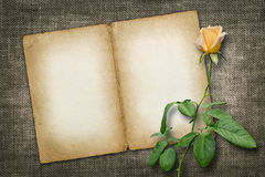Card for invitation or congratulation with yellow rose Royalty Free Stock Image