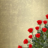 Card for invitation with red roses. Card for congratulation or invitation with red roses Stock Photos