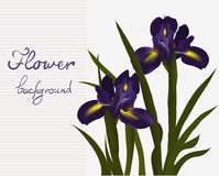 Card iris flower Stock Image