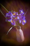 Card iris flowers in a vase with blur Royalty Free Stock Photography