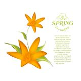 Card of isolated crocus blossom. Stock Photography