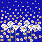 Card with lots of daisies Royalty Free Stock Photography