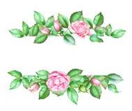 Card mallen med rosa rosor och gräsplansidor Royaltyfri Foto