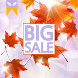 Card with maple leaves, autumn sale. Stock Photos