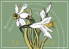 Card with narcissus and poems. Beautiful card with narcissus and poems for flowers, original drawing and poem of springtime, it is hymn spring Royalty Free Stock Photos