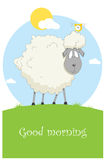 Card with nice sheep Stock Images
