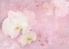 Card with orchid flowers on a light pink background. Template of an invitation, wedding, birthday, anniversary or similar event, c Stock Photography