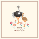 Card with ostriches Stock Images
