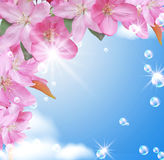 Card with peach blossom Royalty Free Stock Photo