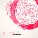 Card with peonies Royalty Free Stock Photography