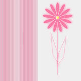 Card pink flower on white background. Vector Stock Photos