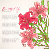 Card with pink lilies Royalty Free Stock Photos