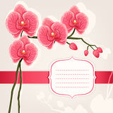 Card with pink orchids Stock Photography