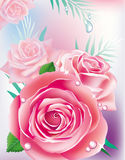 Card with pink roses Stock Photos