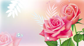 Card with pink roses Royalty Free Stock Image