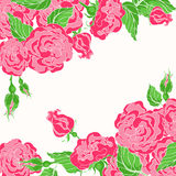 Card with pink roses Royalty Free Stock Photos