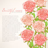Card with pink roses Royalty Free Stock Photo