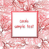 Card with red coral and frame for text Stock Photos