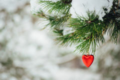 Card with red heart christmas decoration on pine branch Royalty Free Stock Photos