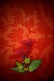 Card, red passion and flower Royalty Free Stock Photo