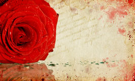 Card with red rose Royalty Free Stock Photo