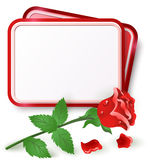Card with red rose. Greeting card with red rose and dew drop Royalty Free Stock Photos
