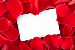 Card and Red rose petals. Blank gift on red roses petals for love messages Royalty Free Stock Photo