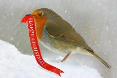 Card robin. Christmas card with robin and happy christmas message Stock Images