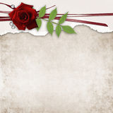 Card with rose and old grunge paper Royalty Free Stock Images