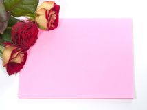 Card and roses. Isolated on white background stock image