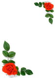 Card with roses and leaves. Paper with roses and leaves in two corners royalty free stock images