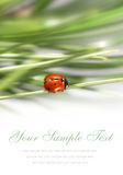 Card with small ladybug Stock Image