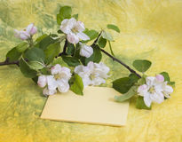 Card with a sprig of flowering apple tree Royalty Free Stock Images