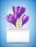 Card with spring flowers Royalty Free Stock Photo