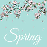 Card with spring flowers Stock Image
