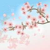 Card with stylized vector cherry blossom Stock Photos