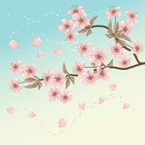 Card with stylized vector cherry blossom Royalty Free Stock Photography