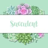 Card with succulents. Echeveria, Jade Plant and Donkey Tails.  Royalty Free Stock Images