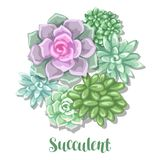 Card with succulents. Echeveria, Jade Plant and Donkey Tails.  Stock Photography