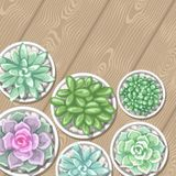 Card with succulents in pots. Echeveria, Jade Plant and Donkey Tails.  Royalty Free Stock Images